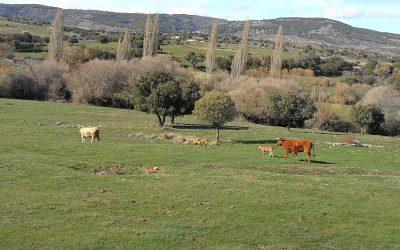 Mundo rural en beneficio propio