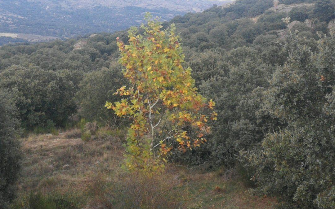 Descubre el otoño en Bonilla
